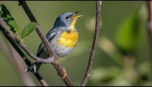 चिड़िया पर कविता