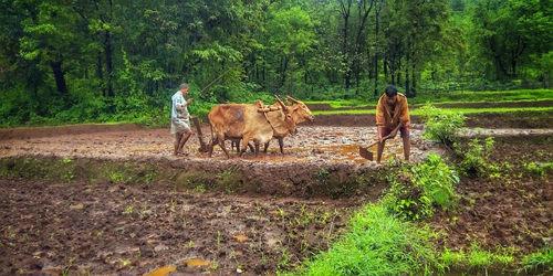 किसान पर कविता
