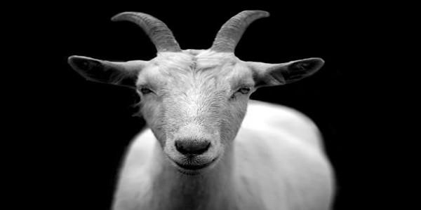 बकरे पर हिंदी कविता